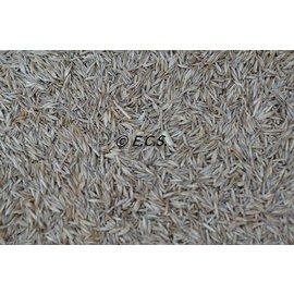 Graszaden ECS Speciaal