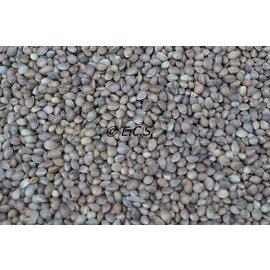 1kg Hemp Seed Fine
