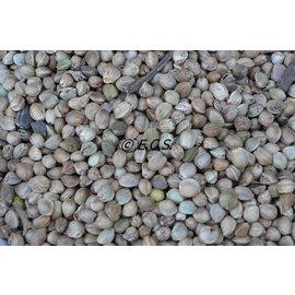 1kg Hemp seed Coarse