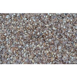 1kg Larch Seed