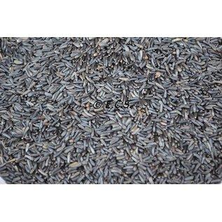 1 kg Niger Samenkeimung Qualität