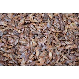 1 kg Tannen Samen feinen weichen