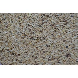 1kg Canary seed