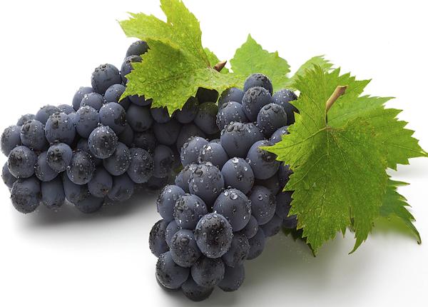 Blauwe druivenrassen
