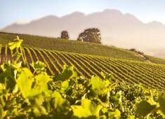 Omnia Wines/Groot Geluk