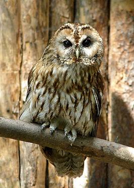 Goedkope Zonnebrillen Online The Owl
