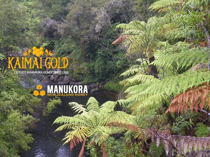 Manuka-Honey MANUKORA