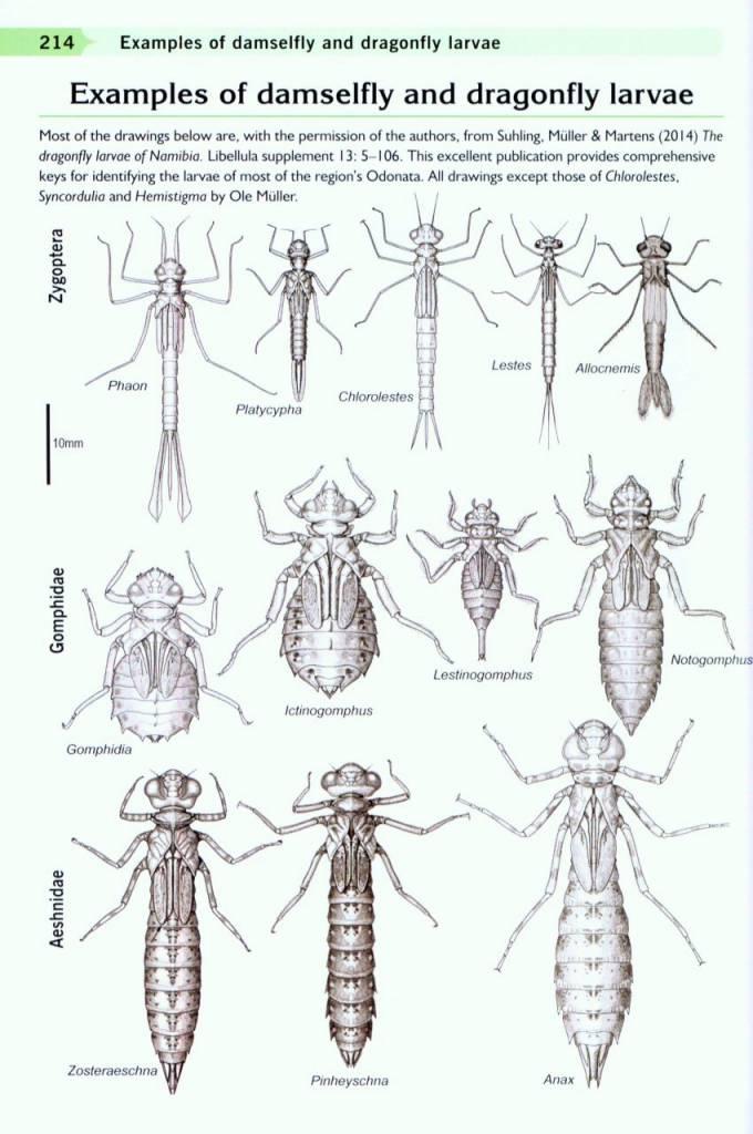 Dragonfly Larvae Diagram - Product Wiring Diagrams •