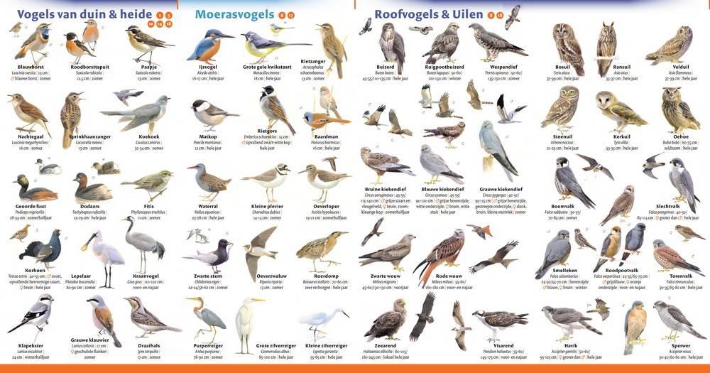 Minigids vogels van nederland en belgi - Alle tuin ...