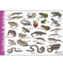 Tringa Paintings Herkenningskaart Amfibieën en Reptielen