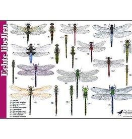 Herkenningskaart Libellen