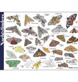 Herkenningskaart Nachtvlinders
