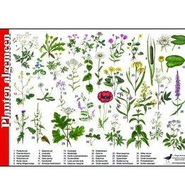 Tringa Paintings Herkenningskaart Planten