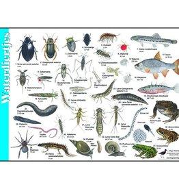 Herkenningskaart Waterdiertjes