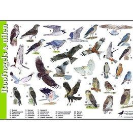 Tringa Paintings Herkenningskaart Roofvogels & Uilen