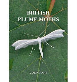 British Plume Moths