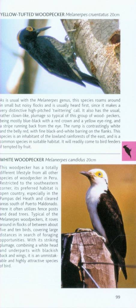 Photo Pocket Guide to the Birds of Peru