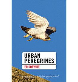 Urban Peregrines