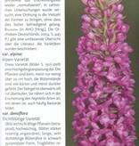 Die Orchideen Deutschlands und angrenzender Länder