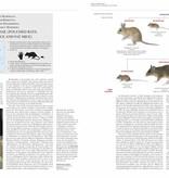 Handbook of the Mammals of the World - volume 7