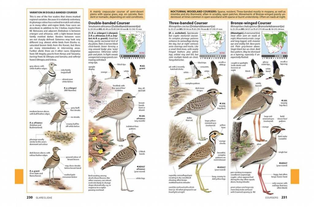 Chamberlain's Waders: The Definitive Guide to Southern Africa's Shorebirds