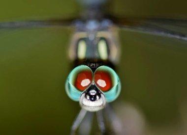 Insecten algemeen