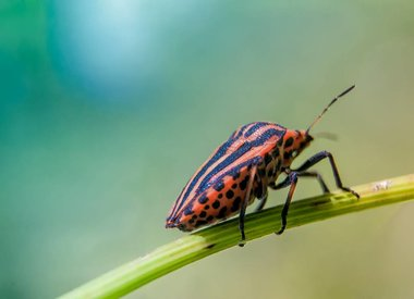 Insecten (overige ordes)