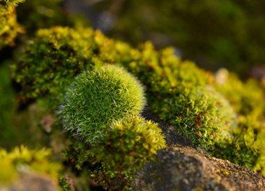 Mossen en korstmossen