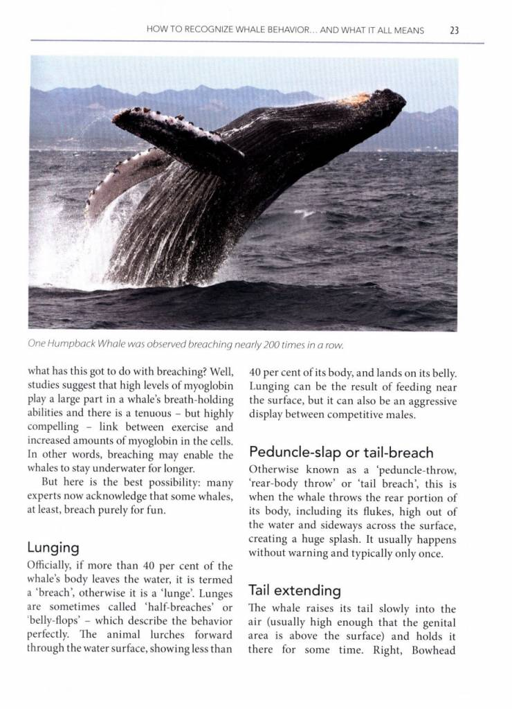 Mark Carwardine's Guide to Whale Watching in North America USA Canada Mexico
