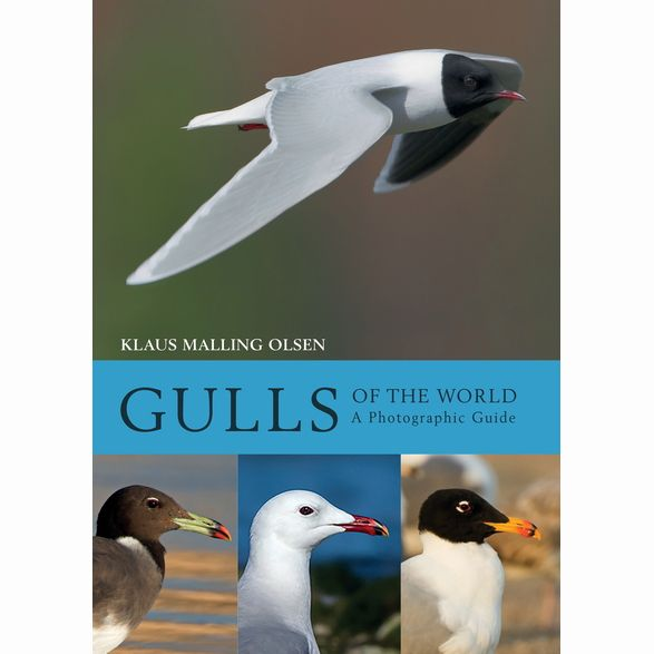 Gulls of the World - A Photographic Guide