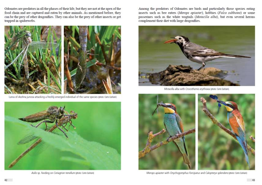 Dragonflies and Damselflies of Europe: A Scientific Approach to the identification of European Odonata without Capture