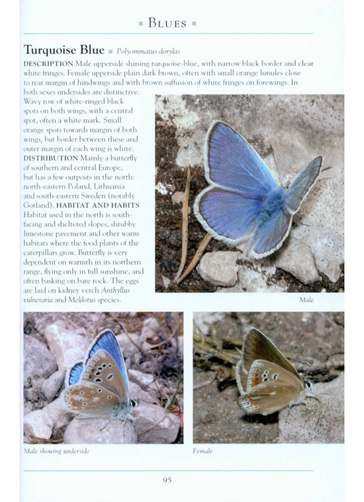 A Naturalist's Guide to the Butterflies of Great Britain & Northern Europe