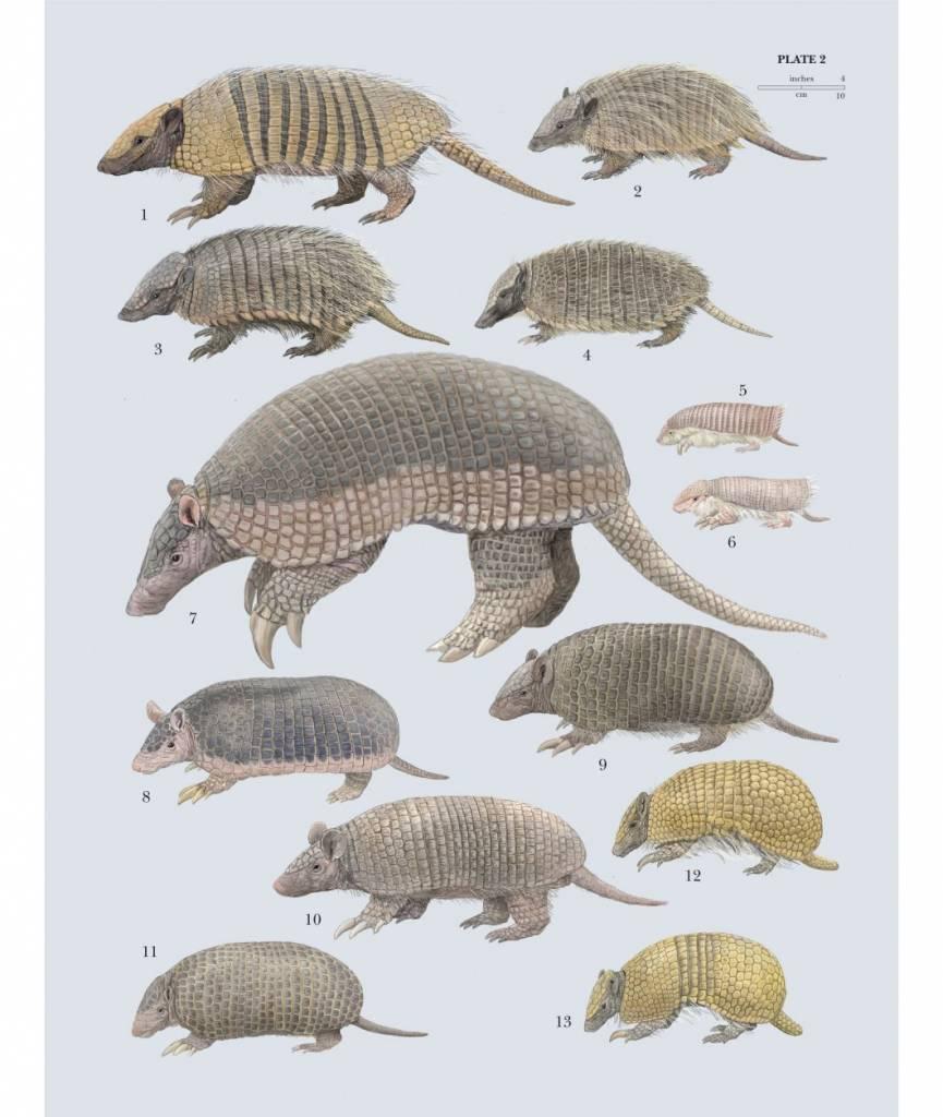 Handbook of the Mammals of the World - volume 8