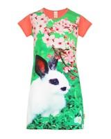 jurkje Mini rabbit