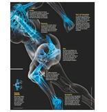 FOCUS FOCUS Gesundheit - Die neuen Strategien für gesunde Knochen und Gelenke