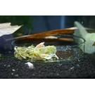 Onlineaquarium spullen Feeding dish