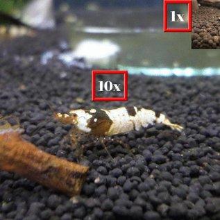 10 F1/F2 crystal black + 1 panda garnaal