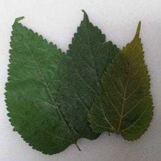Onlineaquarium spullen Mulberry leaves budget