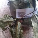 Onlineaquarium spullen Walnut leaves