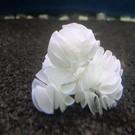 Onlineaquarium spullen Baby garnalen schuilplaats