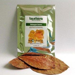 Tantora Tantora extra large catappa leaves
