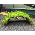 Onlineaquarium spullen Coconut Bridge with Java moss