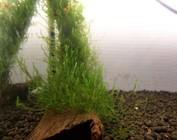 Hout met plant/mos
