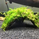 Onlineaquarium spullen Half coconut with java moss
