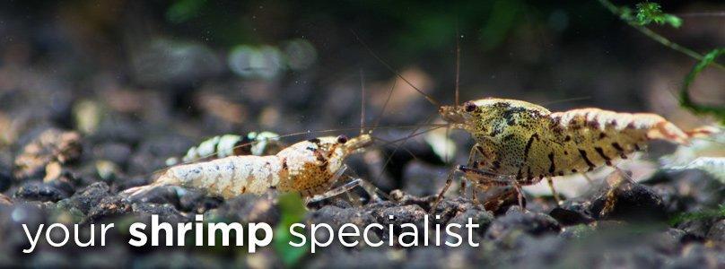 Your shrimp specialist