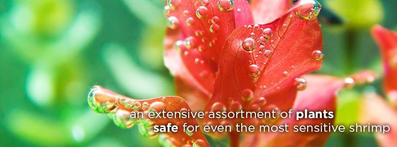 An extensive assortment of plants, safe for even the most sensitive shrimp