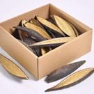 Onlineaquarium spullen Canoinhas pods 10-14cm