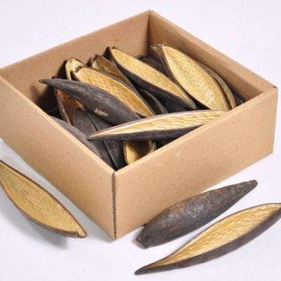 Onlineaquarium spullen Canoinhas pods 10-14 cm