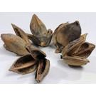 Onlineaquarium spullen Sororoca flower 9-14cm