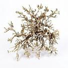 Onlineaquarium spullen Bush wood natural